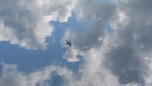 Aulnis meeuw in wolkenzee